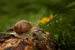 Snail and water drops on grass
