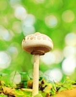 guarda-sol cogumelo