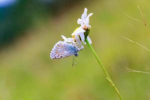 borboleta voada do fio de teia