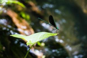 Dragonfly in the nature photo