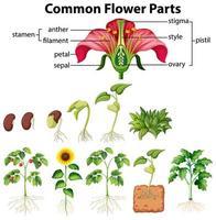 diagrama de partes de flores comunes vector