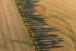 aerial view of  harvest fields in summer
