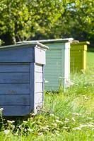 Three colorful beehives in a row, apiary vertical view