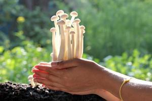 champiñones blancos en mano.