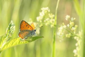 Closeup of a butterfly
