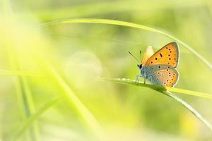 primer plano de una mariposa