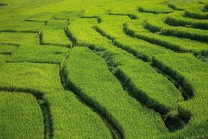 Fondo de campo de arroz en terrazas verdes