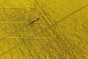 Vista aérea de campos de colheita de estupro amarelo com trator