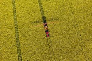 Vista aérea de los campos de cosecha de violación amarilla con tractor foto