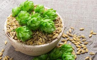 Fresh hops and barley grain - closeup