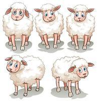 cinco ovejas blancas vector