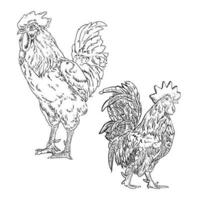 Set of line drawings of roosters vector