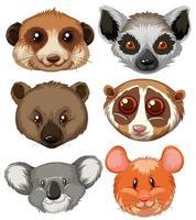 verschillende dierenkoppen
