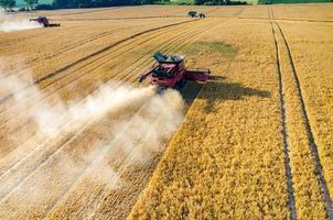 maaidorsers en tractoren die op het tarweveld werken