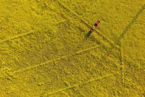 luchtfoto van gele koolzaadvelden met tractor