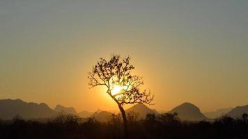 silhouette d'arbre sur fond de montagnes
