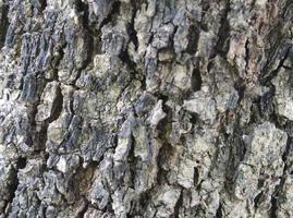 wood texture closeup