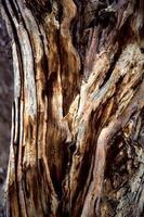 tronco de árvore multicolorida