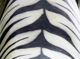 texture of tiger fur from stone photo