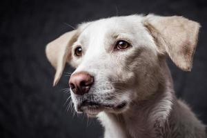 Cute dog in a studio