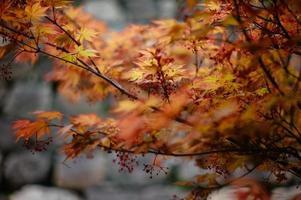 primavera en osaka, japón foto