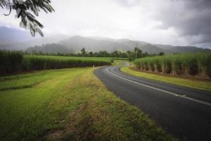 Sugar cane plantation and country road photo