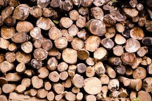 wood stack photo