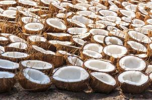 Bunch of coconut halves folded on the ground for drying