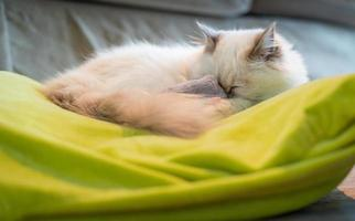 Pure white cat sleeping on green pillow. photo