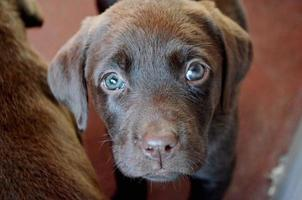 perros photo