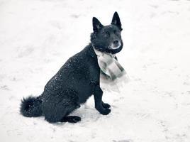 Black dog in snow photo