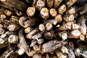 cut wood trunks photo
