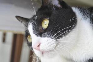 Cara de gato photo