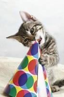 Gato doméstico, gatito jugando con sombrero de carnaval foto