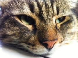 cara de gato afuera foto