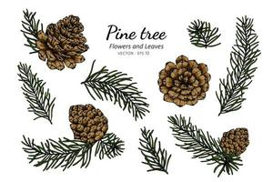 Pine Cone and Leaf Hand Drawn Botanical Illustration vector