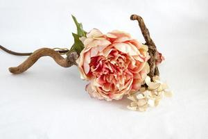 Flor de tela, photo