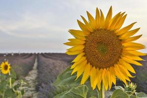 Provence photo