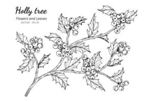 Holly berry and leaf hand drawn botanical illustration vector