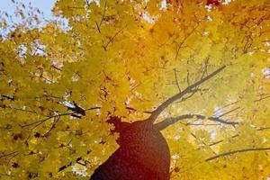 autumn tree focused , close up