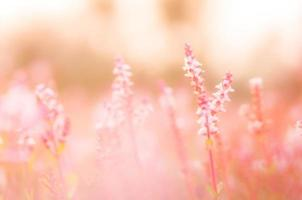 Vintage pink blur flowerer background. (blurry background) photo