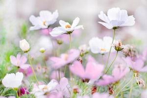 Beautiful flower of grass in blooming