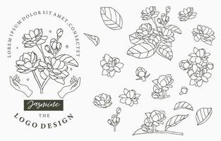 Outline style Jasmine flowers and leaves set vector