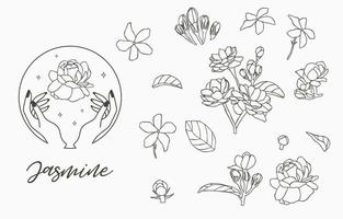 Jasmine collection with leaves vector