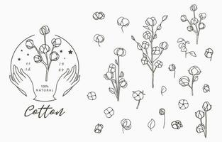 Cotton collection with leaves vector