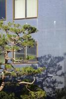 tree and blue wall