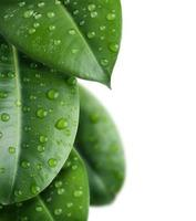 frontera de hojas frescas foto