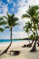 Palm trees on the Wild tropical caribbean sand beach in photo