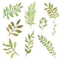 Collection of watercolor hand painted leaf branches vector