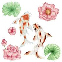Acuarela de peces koi y flor de loto rosa vector